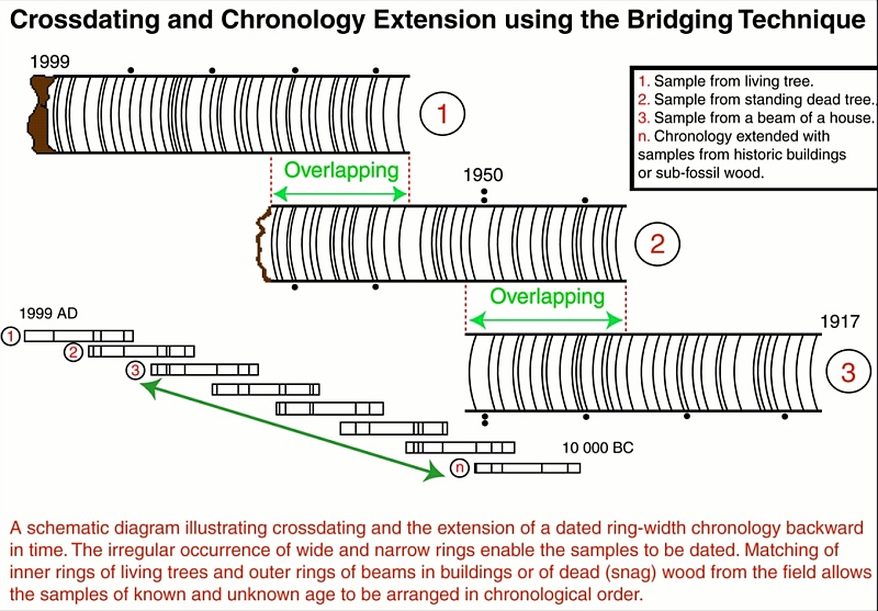 Figure 33: Schematic representation of crossdating in dendrochronology.