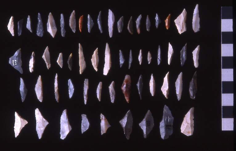 A photograph showing four rows of around 50 flint microliths, with an average length of two centimetres