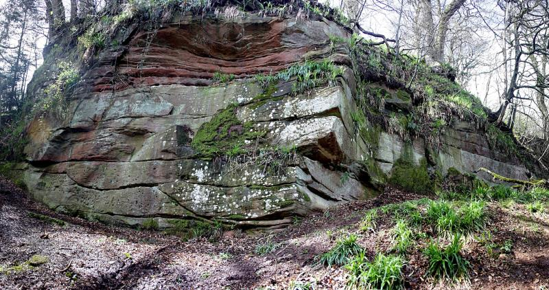 A colour photo of a rocky cliff face partly covered in vegetation, in a woodland setting